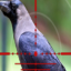 Forest Crow Hunting – 3D for Windows 10/ 8/ 7 or Mac
